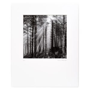 Spruce Forest, Mist and Rising Sun. Hostaff, Niederösterreich, AT