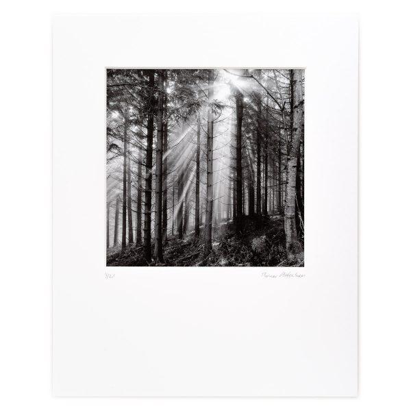 Spruce Forest, Mist and Rising Sun. Hostaff, Niederösterreich, AT