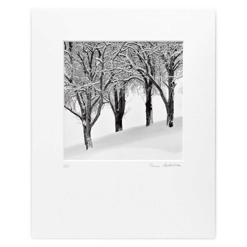 Trees after a Snowstorm, Staff, Niederösterreich, AT
