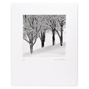 Trees after a Snowstorm, Staff, Niederösterreich, AT